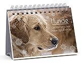 Hunde: Ein literarischer Adventskalender
