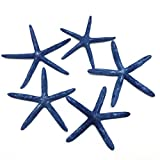 PEPPERLONELY 5PC Dyed Blue Natural Finger Pencil Starfish, 4 Inch ~ 6 Inch