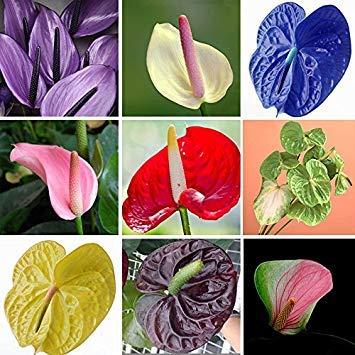 VISTARIC Orange Ringelblume, Topfblumensamen Tagetes erecta, aztekische Ringelblumensamen, Balkonpflanzen und Blumen 30 Samen/Packung gf41