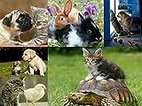 Edition Colibri Ensemble de 6 cartes postales Thème amitié entre animaux (chien, chat, tortue etc.)