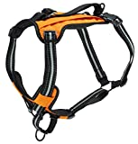 PetSafe Walk-Along Outdoor Dog Harness, No-Pull Solution,...