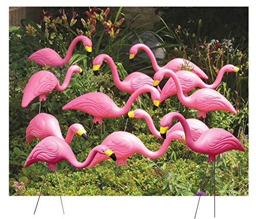Bloem Pink Flamingo Garden Yard Statue (Bulk G2-12), 12-Pack, 25', 12 Pack