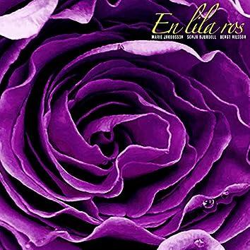 En lila ros