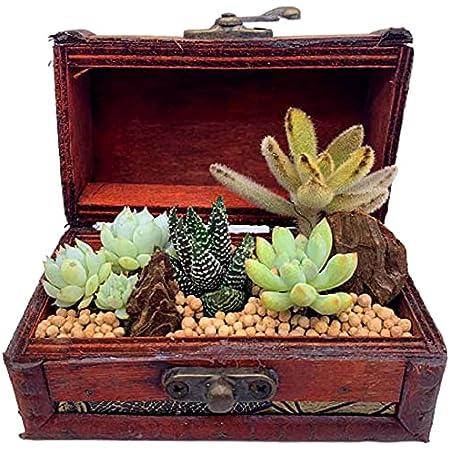 伊豆シャボテン本舗 観葉植物 サボテン 多肉植物 寄せ植え 宝箱ケース入り(小) 木製 植木鉢 卓上