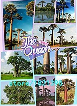 100 samen laubbaum Samen baobab baum samen Für Haus & Garten