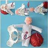 YXZQ Modelo de Pelvis Femenina para el Parto - Modelo pélvico de demostración del Parto con Modelos de Pelvis del bebé - Modelo de Pelvis Femenina para el Parto con cordón Umbilical de Placenta d