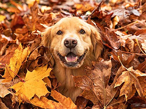 5D DIY perro bordado de diamantes animal punto de cruz decoración de pared de otoño decoración de mascotas kit de bordado pintura de diamantes A13 60x80cm