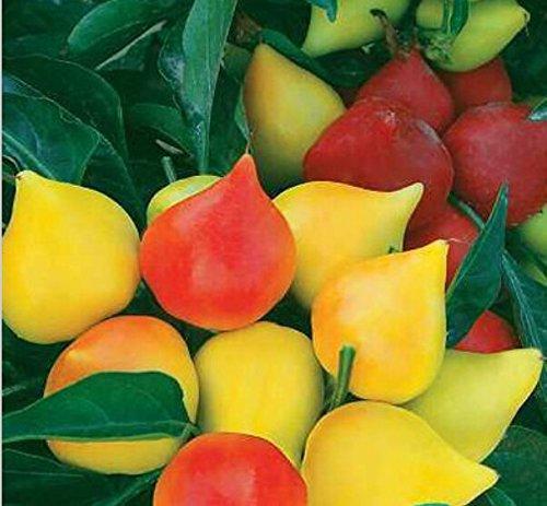 Promotion! 50pcs super Big Red Hot Pepper Seeds 100% Haute Qualité Paprika