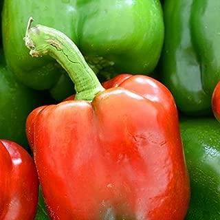 David's Garden Seeds Pepper Bell Jupiter JK614 (Red) 50 Non-GMO, Heirloom Seeds