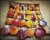 Muscheln Gemischt 9 Arten Ozean Muscheln und 2 Arten Seesterne 3-9 CM Perfekt für Vase Füllstoffe,Strand Thema Party Hochzeit Dekor,DIY Kunsthandwerk,Fisch Panzer,Kerze Herstellung - 7