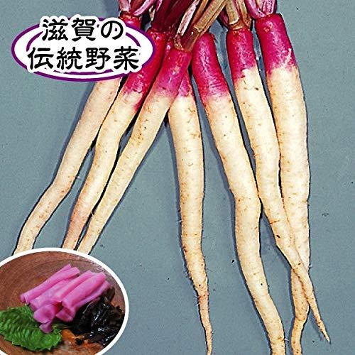 国華園 種 野菜たね カブ 日野菜かぶ 1袋(10ml)/メール便配送