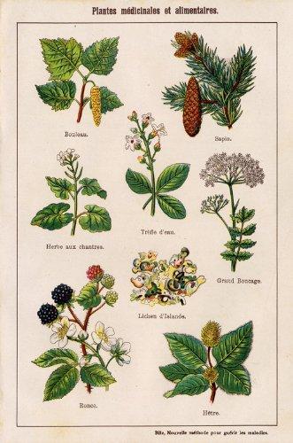 Botánica antiguo ThePrintsCollector cruzerlite-Blackberry-p