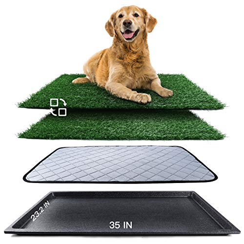 dog pads for apartments