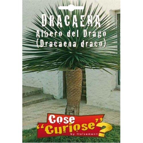 Seeds - Dragon Tree (Dracaena draco)