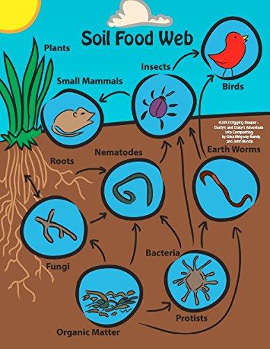 Soil Food Web Poster For Classroom Or Ho Buy Online In Fiji At Desertcart