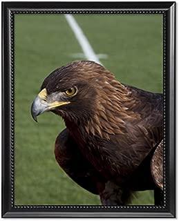 ClassicPix Black Wood Framed Print 11x14: The Golden Eagle That Flys at The Auburn University's.