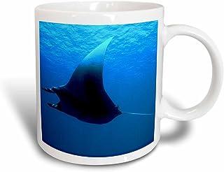 3dRose Marine Life, Manta Ray at Rocky Island, Red Sea, Egypt, Magic Transforming Mug, 11-Oz