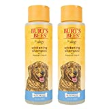 Burt's Bees for Dogs Natural Whitening Shampoo with Papaya & Yogurt   Brightening White Dog Shampoo for All Dogs   Cruelty Free, Sulfate & Paraben Free, pH Balanced for Dogs - Made in USA, 16 Oz