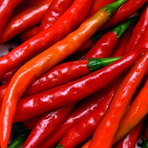 Cayenne Red Long Pepper  Organic Non-GMO Cayenne Pepper Seeds (100+ Pepper Seeds) by PowerGrow Systems