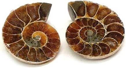 925 Sterling Silver Small Ammonite Ring,Fossil Ring,Fibonacci Ring Size 7,Adjustable Ring,RANS