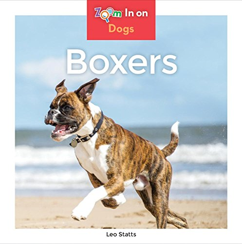 Boxers (Zoom In on Dogs)