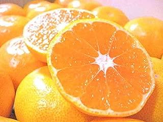 和歌山県産 高糖度 温州みかん とろける美味しさ  Sサイズ 約5kg (約60個)