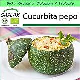 SAFLAX - - BIO - Zucchina - Tondo di Nizza - 5 semi - Cucurbita pepo