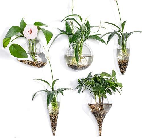 EssenceLiving Juego de 5 macetas de Cristal para Colgar en la Pared, macetas Redondas de Cristal para Colgar Plantas de Aire, floreros, terrarios para Colgar en la Pared