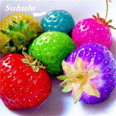 Big Promotion! 1000 Pcs Four Seasons en pot Graines Strawberry Super Sweet Seeds fruits Bonsai plantes Semences Maison et Jardin 10