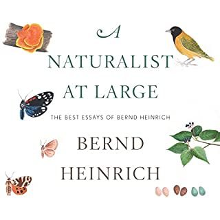 A Naturalist at Large     The Best Essays of Bernd Heinrich              By:                                                                                                                                 Bernd Heinrich                               Narrated by:                                                                                                                                 Rick Adamson                      Length: 8 hrs and 19 mins     18 ratings     Overall 4.7