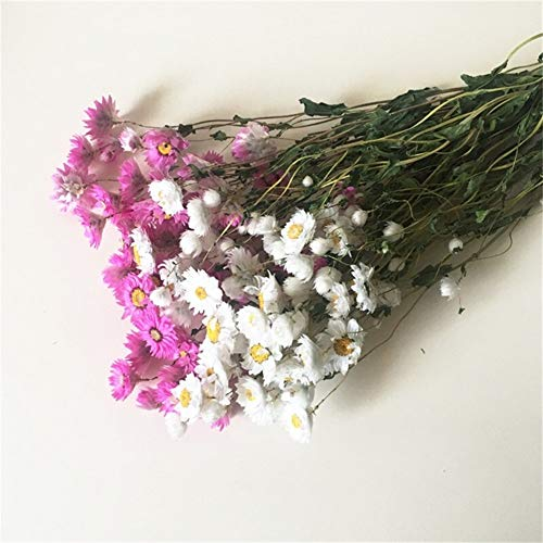 KDHJY Hohe Qualität 40-50cm Mini getrocknet Chrysanthemum Blumen-Bündel for Home Hochzeit Dekoration Vase deko Blumen (Color : Mixed Color)