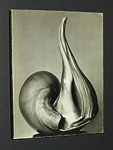 EW 100: Centennial Essays in Honor of Edward Weston