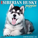 Just Siberian Husky Puppies 2021 Calendar