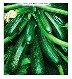 Semi Per Coltivare Zucchino Diamant Hybrid Cucurbita Pepo Zucchine Semi Per Coltivare Agricoli Zi015 A 75 Sementi Circa Alta Qualità