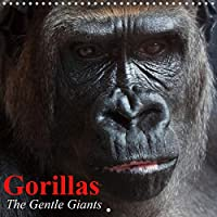 Gorillas . The Gentle Giants (Wall Calendar 2021 300 300 mm Square): The world's most rare and critically endangered animal species (Monthly calendar, 14 pages )