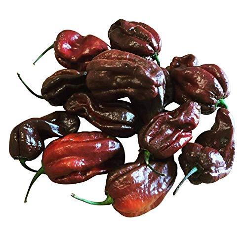 Habanero Chokolate 10 Samen (Ultrascharfe und seltene Chili)