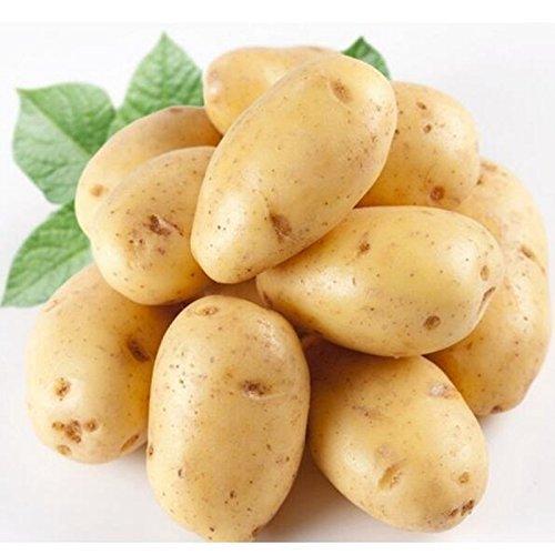 Las semillas de patata Antiarrugas Nutrición vegetal verde para jardín plantando semillas de patata absorción de la radiación 10 semillas / Paquete