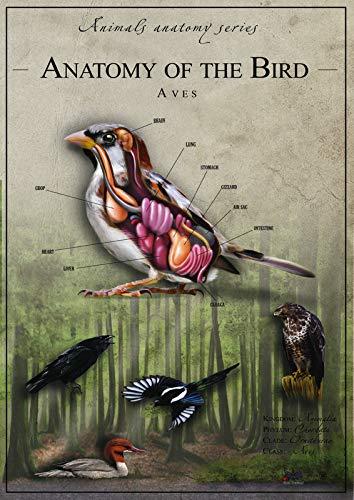 Póster de película de anatomía de pájaros 1 – Mejor impresión artística de calidad para decoración de pared – A0Canvas (40/30 pulgadas) – (102/76 cm) – estirado, listo para colgar