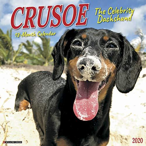 Crusoe the Celebrity Dachshund 2020 Wall Calendar Calendar