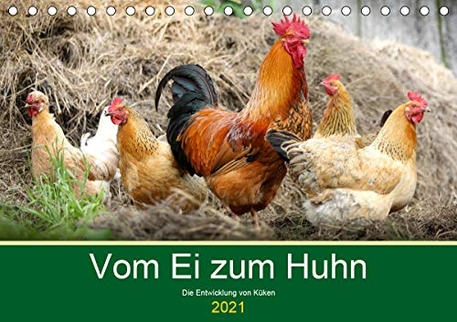 Vom Ei zum Huhn. Die Entwicklung von Küken (Tischkalender 2021 DIN A5 quer)
