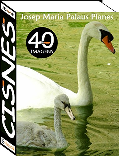 Cisnes (40 imagens)