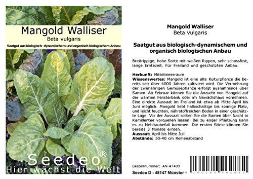 Seedeo® Mangold Walliser (Beta vulgaris) 50 Samen BIO