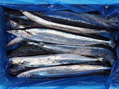 冷凍さんま 55尾 約7.5kg サンマ 業務用 さんま 秋刀魚 ラウンド 塩焼き 煮付け 焼魚 焼き魚 【水産フーズ】