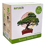 Bonsai Tree Starter Kit Indoor