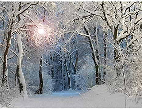 Photo Painting Digital Winter Tree Branches Unframed Wall Art Poster