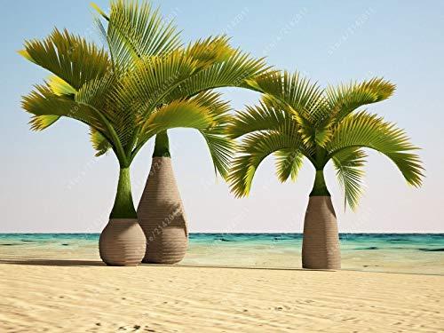 PLAT FIRM GRAINES DE Germination: 10 PC-Flasche Palme Samen Exotische Pflanzen Tropisches Bonsai-Baum Zier