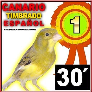 30 Minutos De Canto Del Canario Timbrado Español. Metodo De Entrenamiento. Bird Serinus Canaria (Canaries)