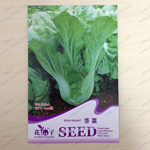 SVI Semences d'origine de paquets végétales, graines de moutarde blanche, fleur Madura de 60 jours, 100 particules semences/sac