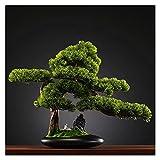 Bonsai Plant 16.9 Pulgadas Árbol de bonsáis Artificiales, decoración de Platos de plástico de Plantas, Plantas de Casas Artificiales en Maceta, para la Oficina en casa, Decoración del jardín Zen Fake