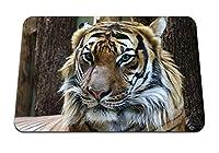 26cmx21cm マウスパッド (タイガーマズルプレデターは大きな猫に見える) パターンカスタムの マウスパッド